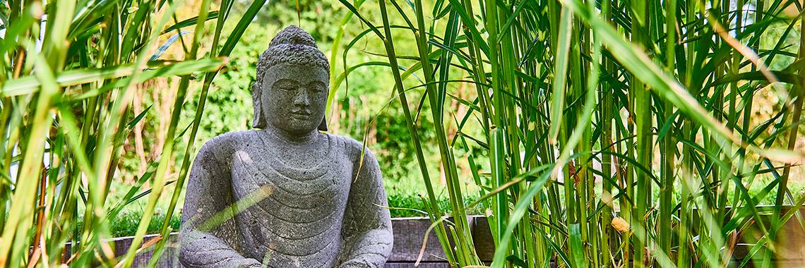 Yoga B.K.S Iyengar